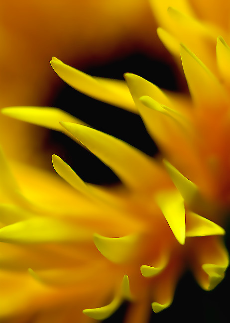 gerbera-daisy-abstract-1.jpg