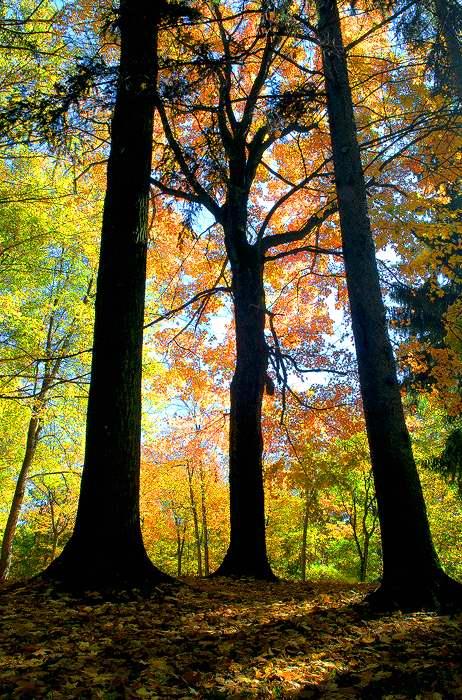 autumn-rett-1.jpg