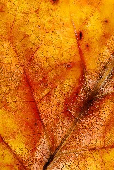 fall-leaf-art-3.jpg