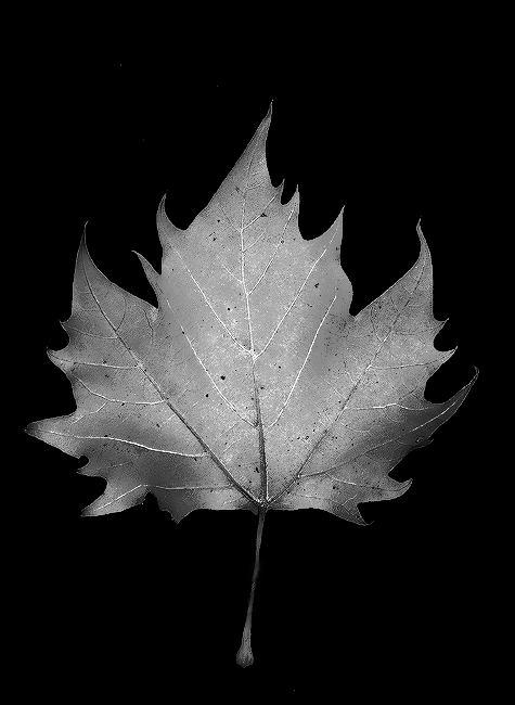 leaf-art-7.jpg