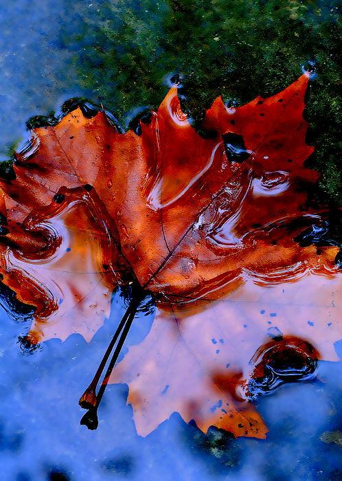 leaf-art-8.jpg