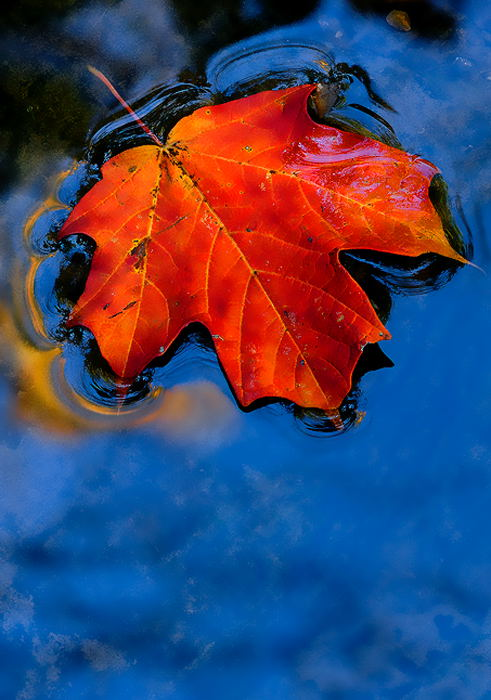leaf-art-13.jpg