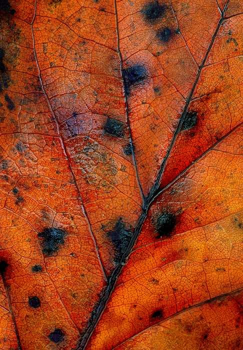 leaf-art-14.jpg