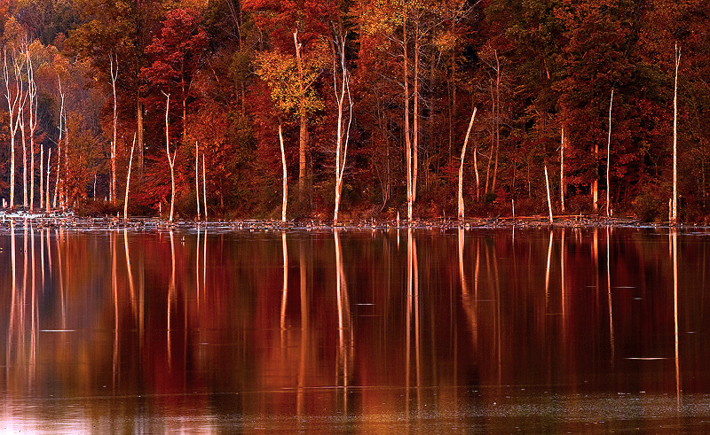 fall-reflections3