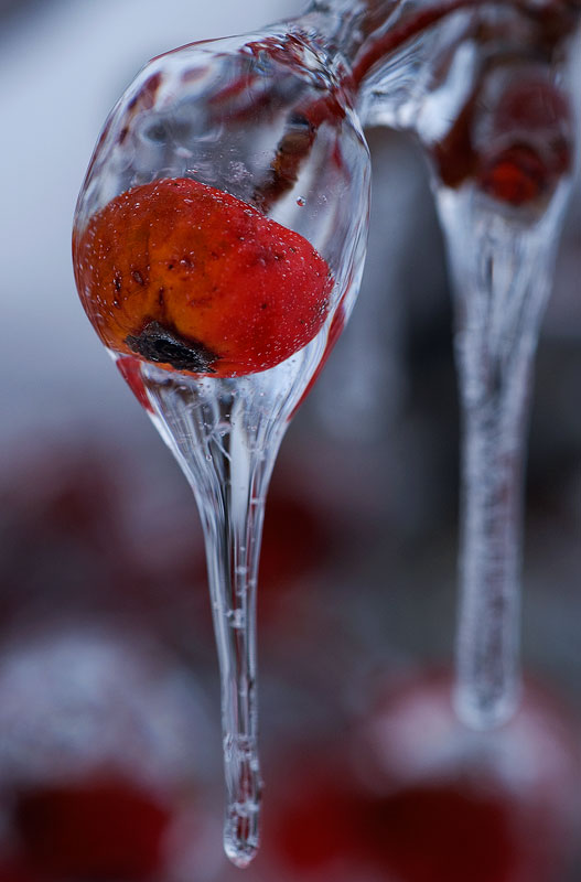winter-berry-13