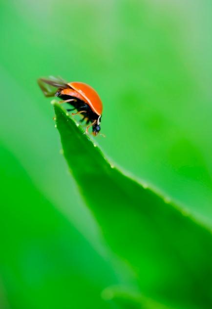 Lady Bug 1 2009