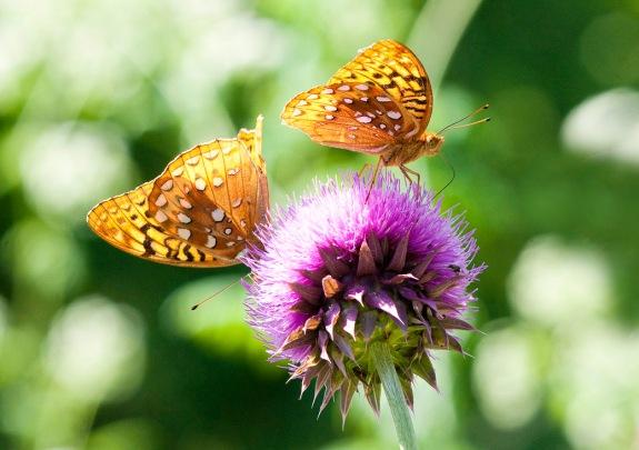 butterflies 1 2012