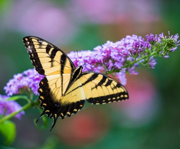 butterfly 2 2013
