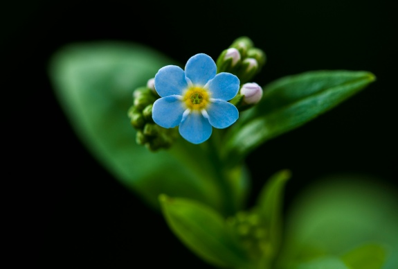 forget me not 1 2013