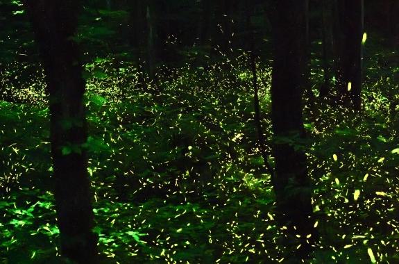 fireflys 2 2014