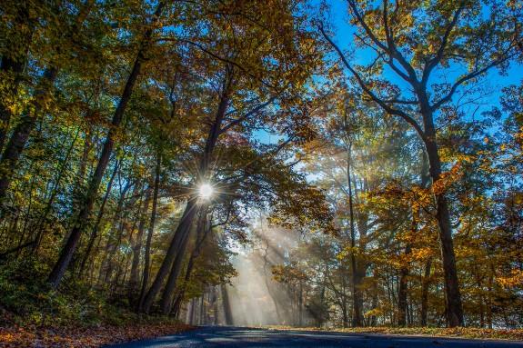 clifty sunburst fall 2 2014