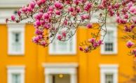 lanier spring 4 2019